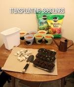 How To Transplant Seedlings [Herb Garden Series]