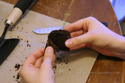 """Removing the """"skin"""" from the seedling pellet"""