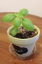 How To Prune Your Herbs [Herb Garden Series]