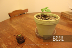 4 Simple Things To Help Your Plants Grow [Herb Garden Series]