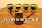 Quick Tips For Watering Plants [Herb Garden Series]