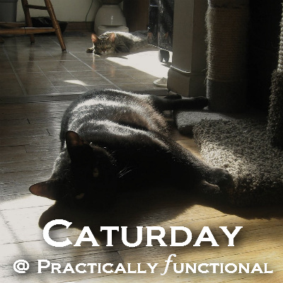 Caturday @ Practically Functional: Catnip Toys