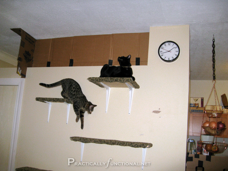 Carpet-Covered Cat Climbing Shelves!