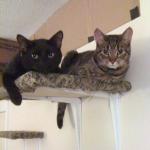 Cat Shelves: Make your own cat climbing area