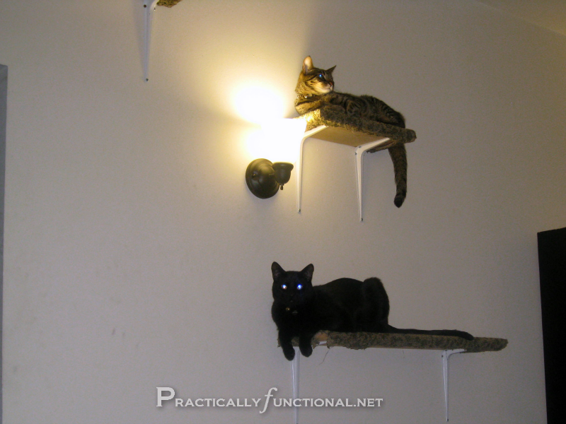 Carpet Covered Cat Climbing Shelves