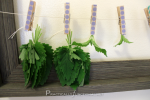 Herb Drying The Easy Way [Herb Garden Series]