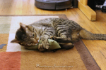 DIY Refillable Catnip Toys