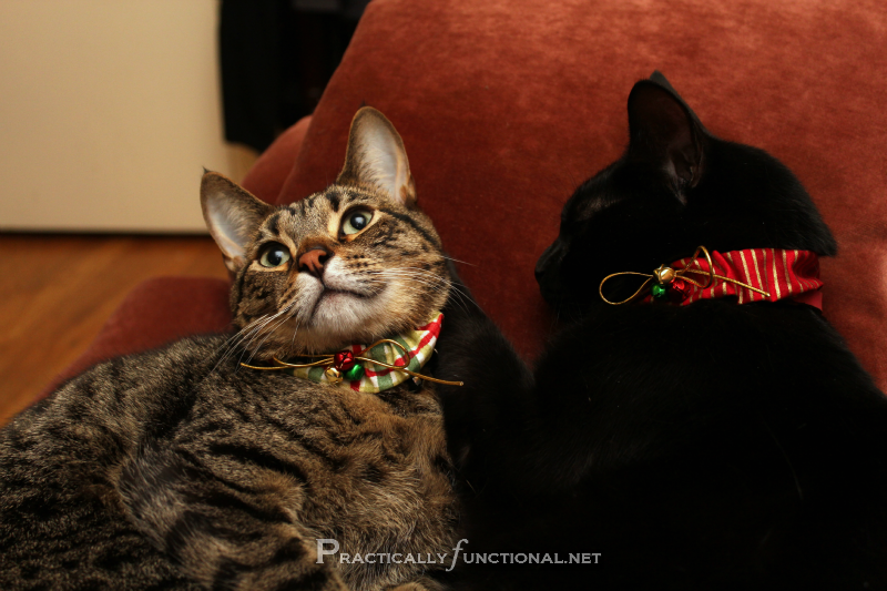 Collars For Cats That Stops Them Getting Diseases