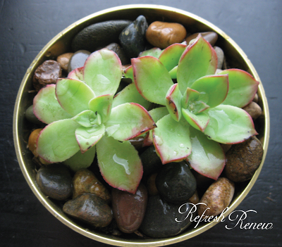 Brass Bowls: A Sparkly Succulent Tutorial