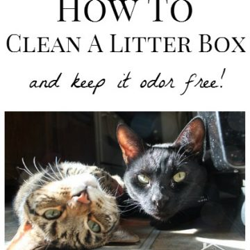 How To Clean A Litter Box And Keep It Odor Free!