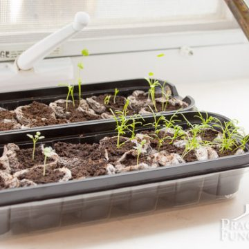 The Seedlings Have Sprouted!