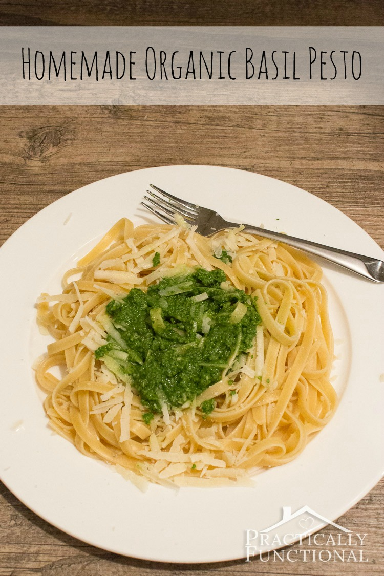 There's nothing better than homemade basil pesto with fresh homegrown, organic basil!