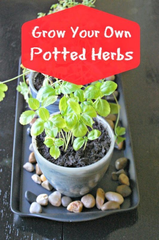 Growing Potted Herbs from House and Home
