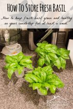 How To Store Fresh Basil