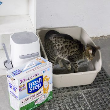 Lightweight Cat Litter!