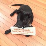 DIY Guard Dog Baby Announcement-3
