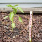 DIY Twig Plant Markers