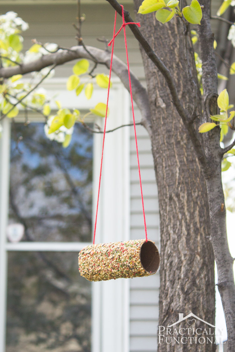 diy bird feeder made from a toilet paper roll covered in peanut butter and bird seed hanging from a tree