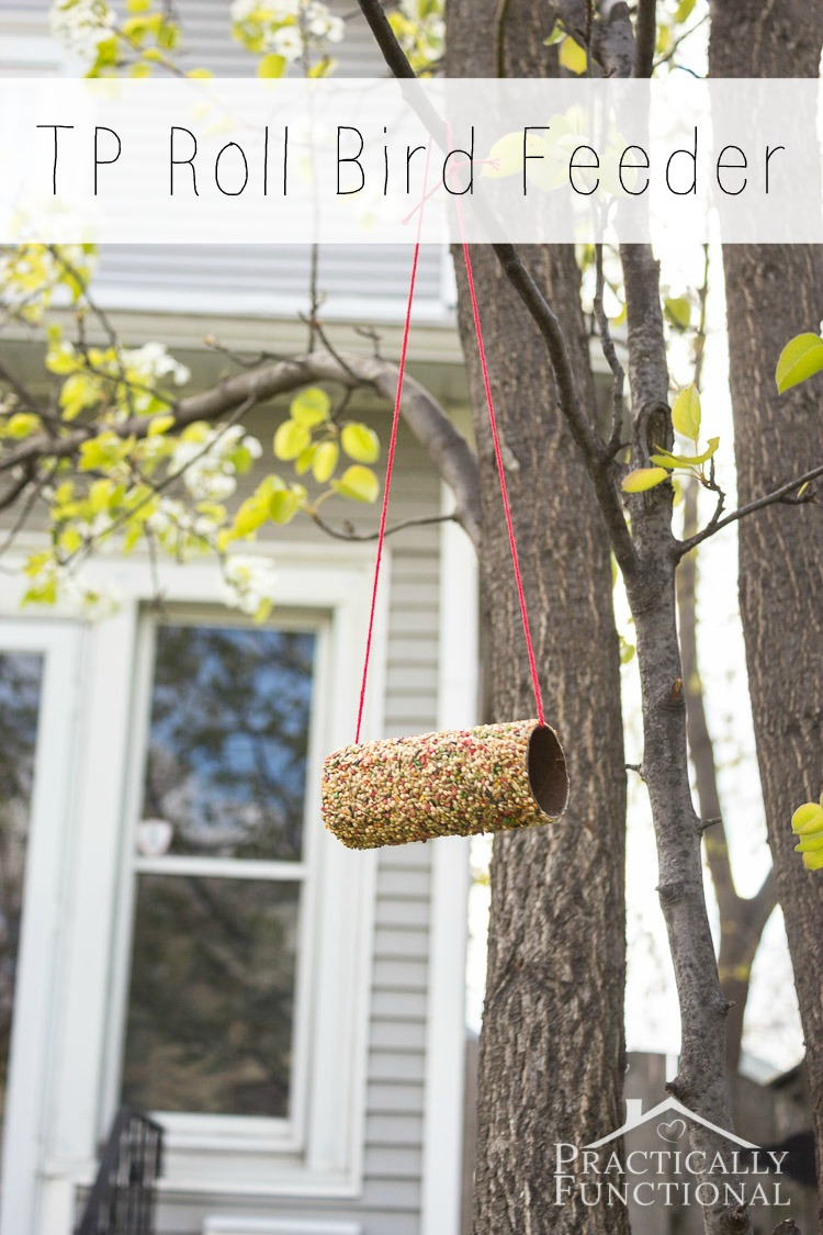 toilet paper roll and peanut butter bird feeder hanging from a tree with yarn