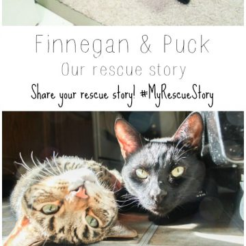 Adopting Shelter Cats – Our Rescue Story!