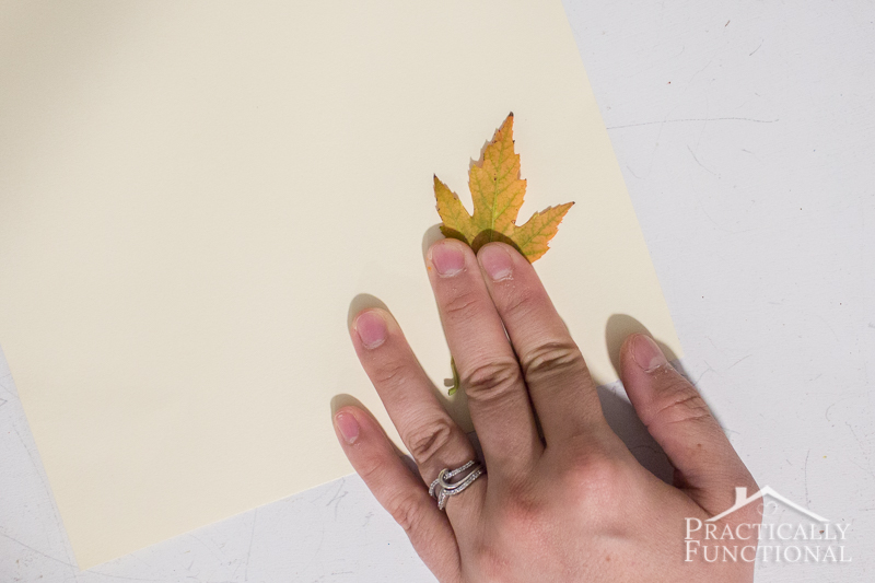 Press the colored leaf down onto paper to leave a stamp
