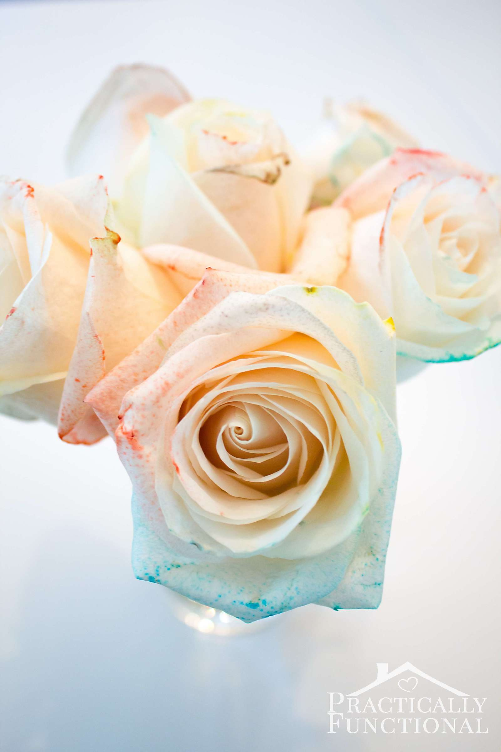DIY rainbow roses with food coloring and water! Great tips on how to make the color brighter or more subtle!