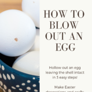 Egg blowing 101 how to blow an egg to make it hollow