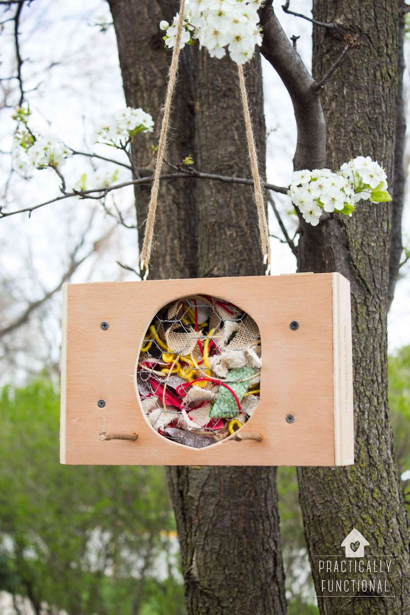 Make a DIY bird nesting material holder from a cigar box