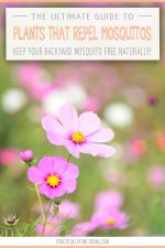 The Ultimate Guide: 34 Plants That Repel Mosquitos Naturally!
