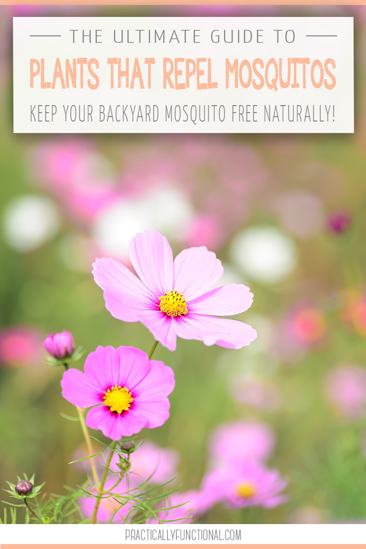 The ultimate guide 34 plants that repel mosquitos naturally for What plants naturally repel mosquitoes