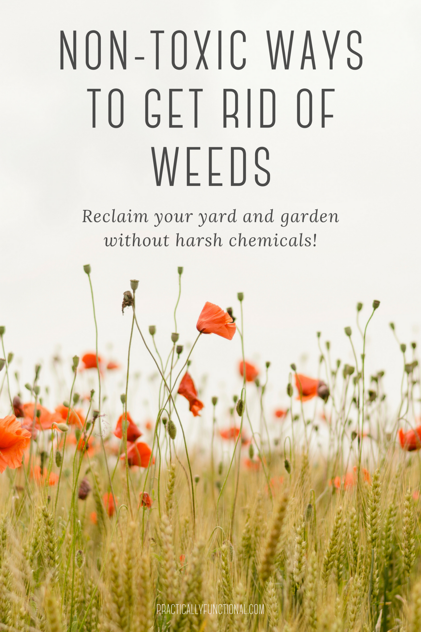 10 non-toxic ways to get rid of weeds