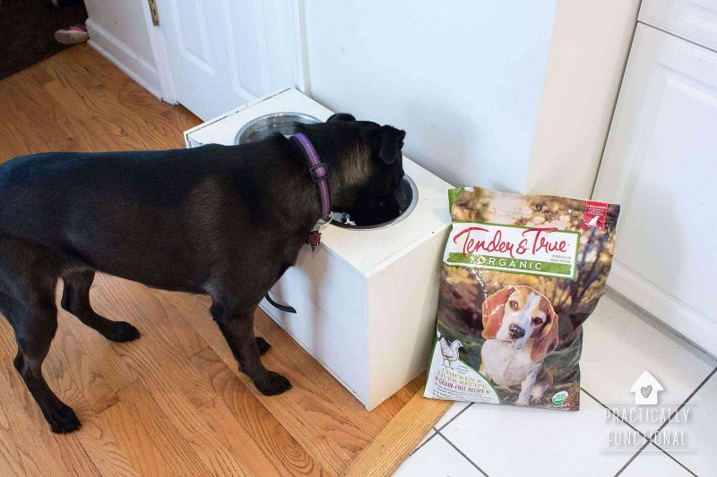 Celebrating Furry Family Members with Tender & True Dog Food