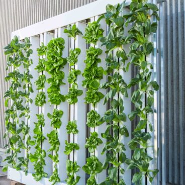 How to hang a vertical garden
