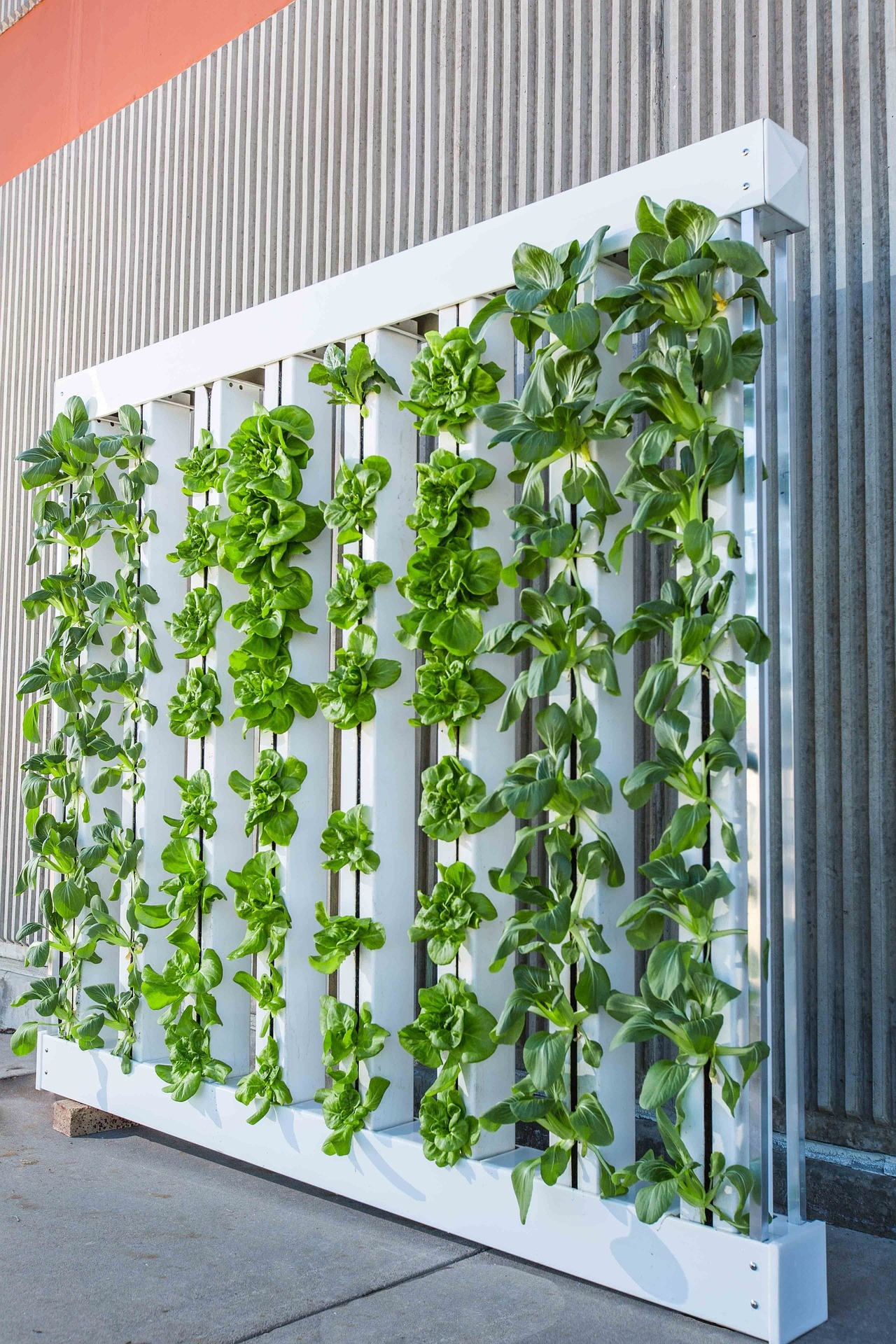 Superieur How To Hang A Create A Vertical Garden