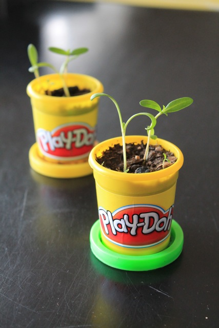 Playdoh containers as plant starter pots