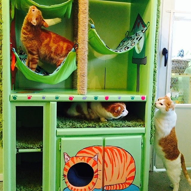 Diy cat hotel from a piece of furniture and 25 other simple diy pet projects anyone can do