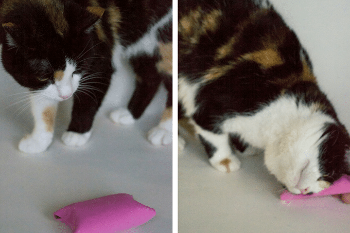 Diy cat toy and 25 other simple diy pet projects anyone can do 2