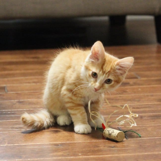 Diy cat toys made from wine corks and 25 other simple diy pet projects anyone can do