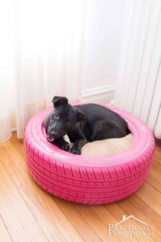 Diy dog bed from a recycled tire and 25 other simple diy pet projects anyone can do