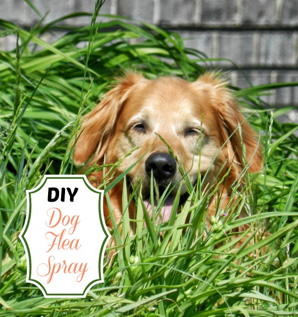 Diy dog flea spray and 25 other simple diy pet projects anyone can do