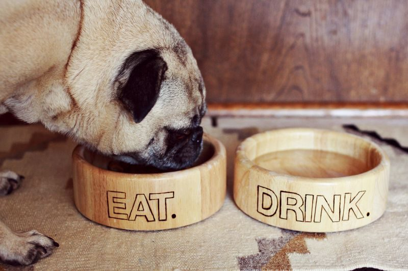 Diy wood burned dog bowls and 25 other simple diy pet projects anyone can do