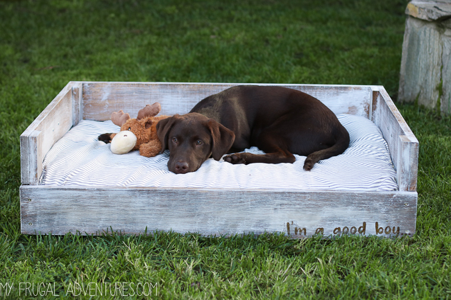 Dog bed tutorial and 25 other simple diy pet projects anyone can do