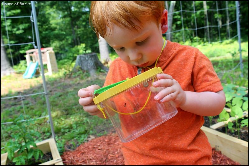 Toddler bug hunt and 23 other fun summer activities for toddlers