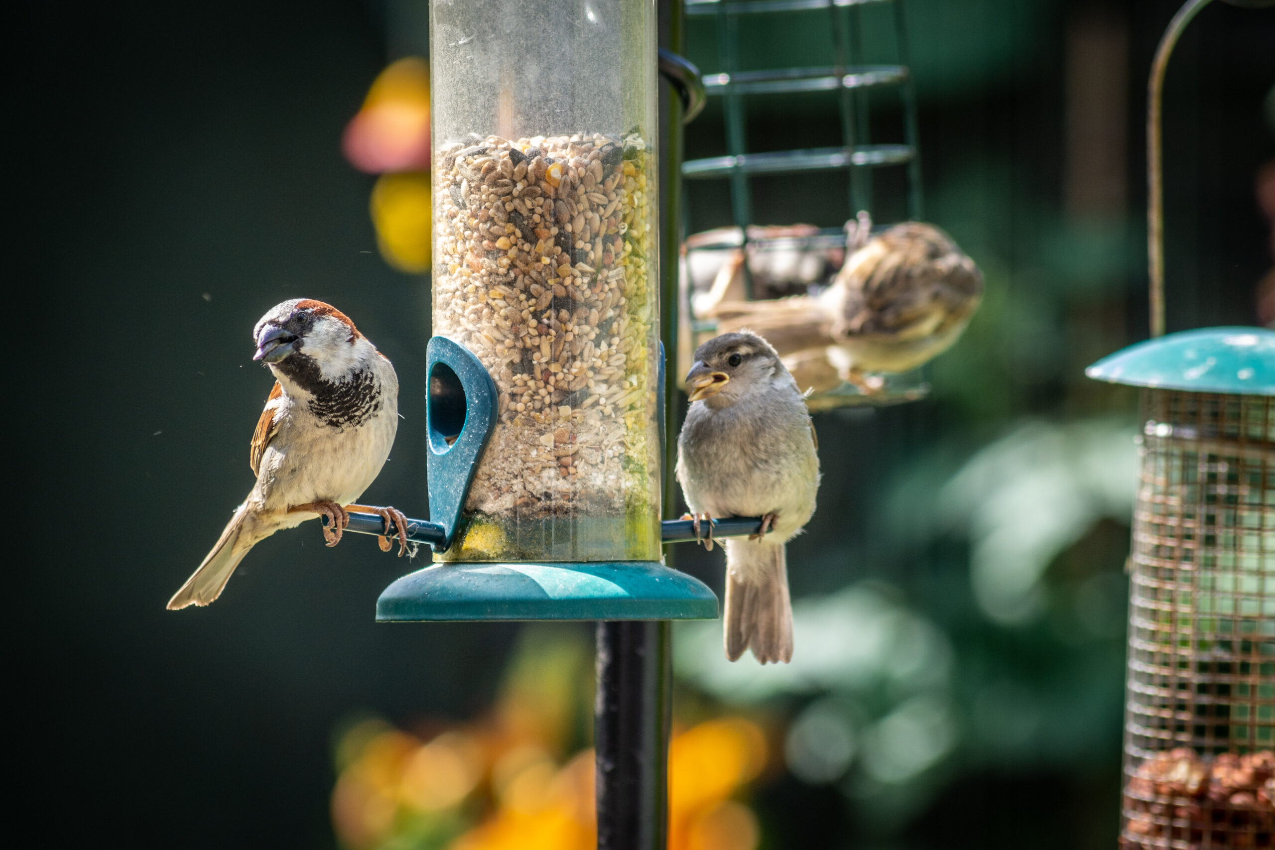 5 Ways to Attract Birds to Your Garden with a Bird ...