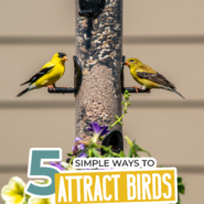 """Finches feeding on backyard feeder with flowers with text """"5 simple ways to attract birds to your backyard!"""""""