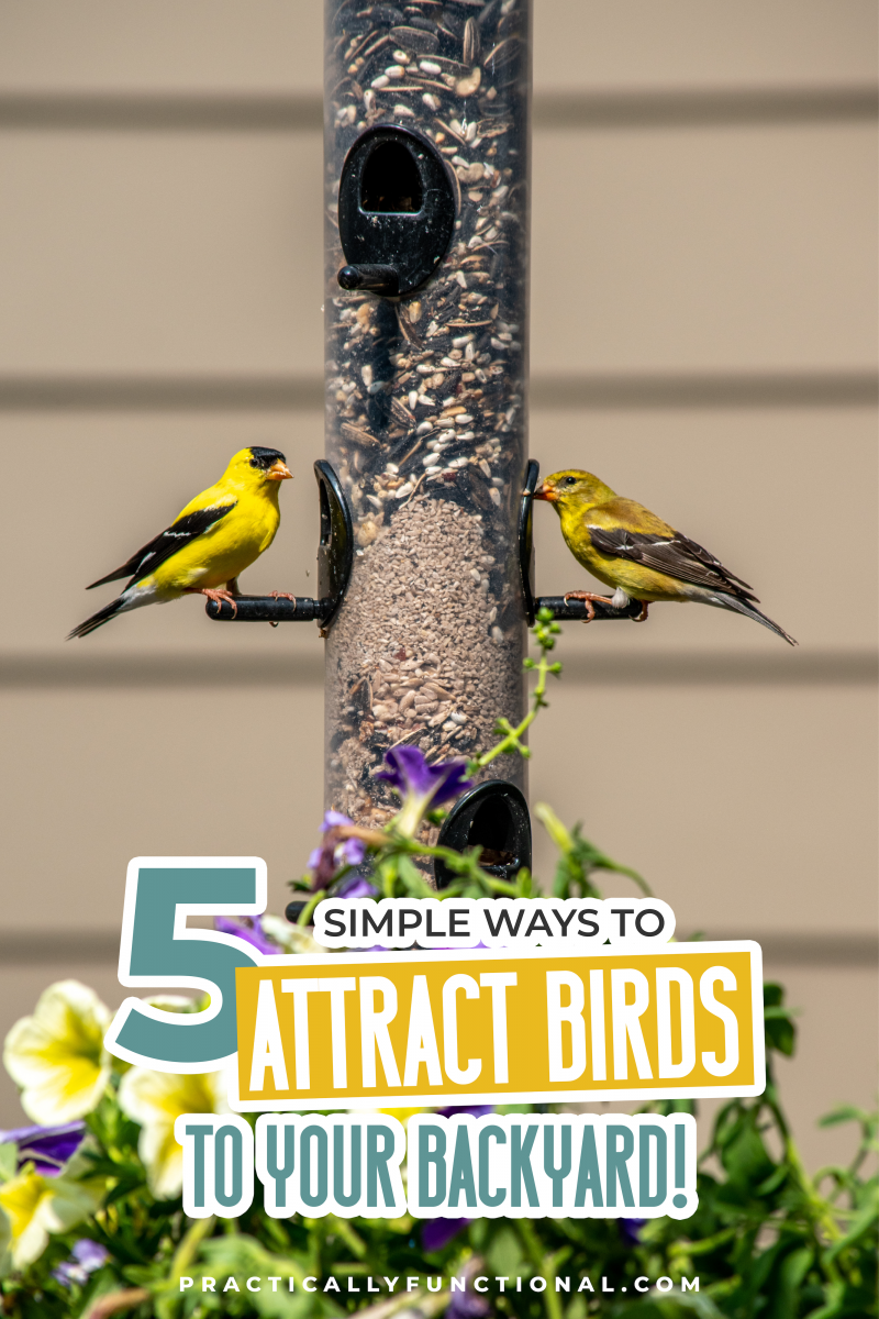 "Finches feeding on backyard feeder with flowers with text ""5 simple ways to attract birds to your backyard!"""