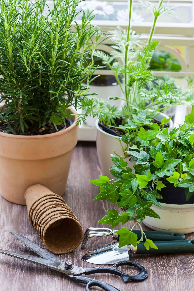 potted plants in a container garden