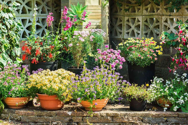 various flowers and plants in a container garden in front of a house
