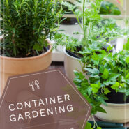 """potted plants in a container garden with text """"container gardening"""""""