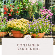 """various flowers and plants in a container garden in front of a house with text """"container gardening"""""""